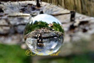 Wedding rings through a glassball