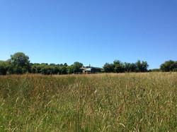 Meadow Yurt in June