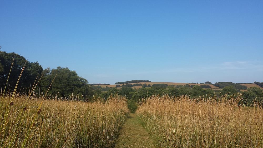 Meadow in August