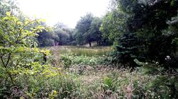 Wildlife Wetland