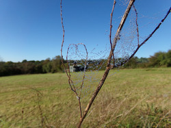 Meadow Yurt in September