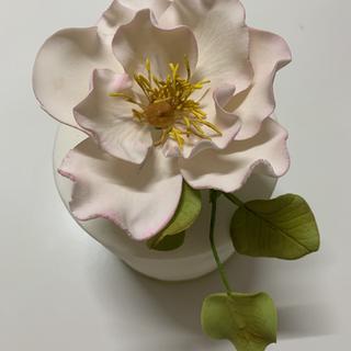 Heritage Rose.HEIC