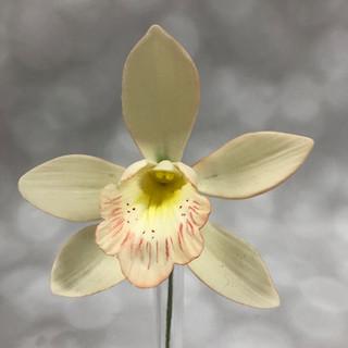 Cymbidium Orchid $10