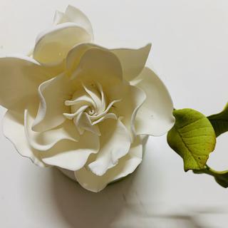 Gardenia.HEIC