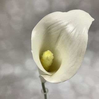 Calla Lilly $8