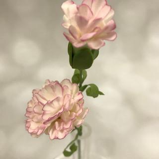 Carnation $5