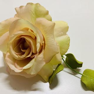 Rose.HEIC