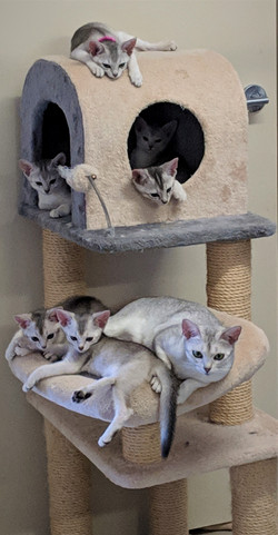 Two litters