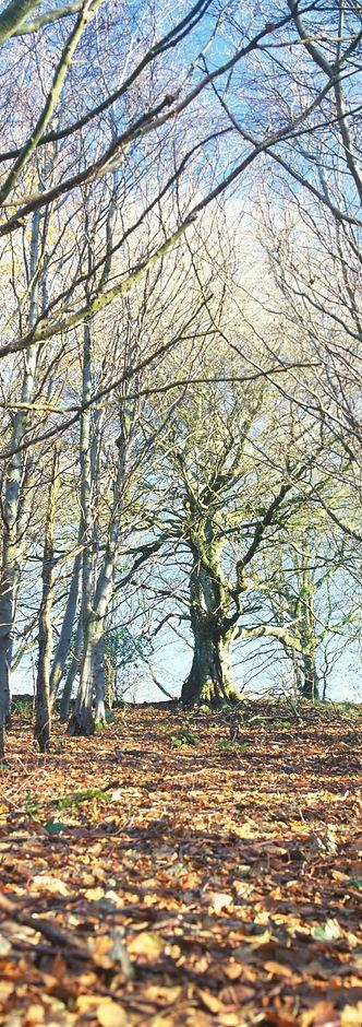 wintertree.jpg