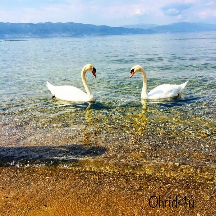 www.ohrid4u.com