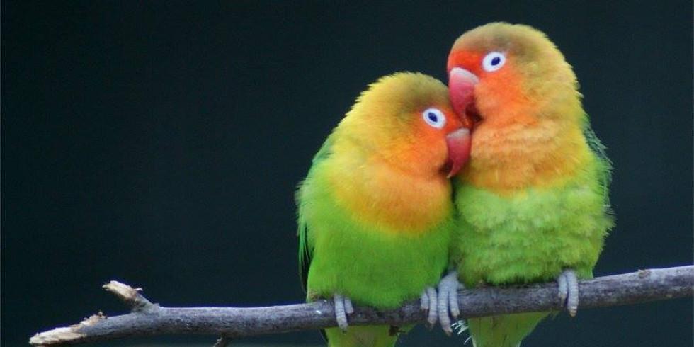 6th Annual Lovebirds Concert
