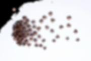 frutbols-web.png