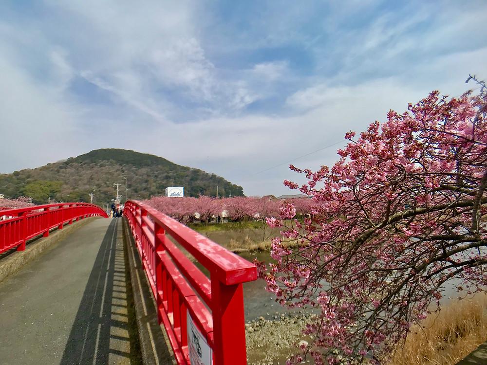 河津桜まつり会場