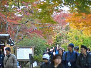 伊豆の修善寺のもみじ林は紅葉で真っ赤っか。