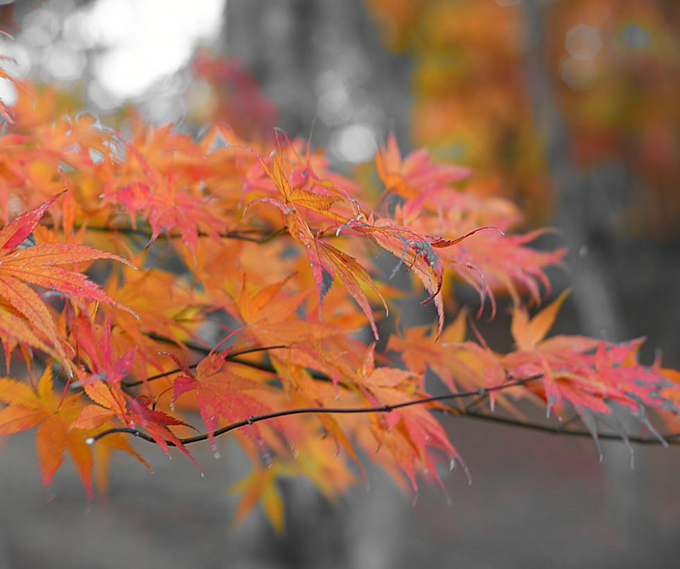 中伊豆の紅葉