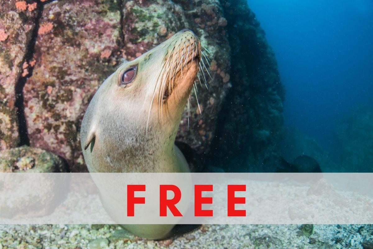 Best of Baja: Diving in La Paz, Mexico