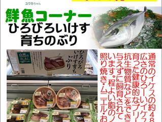 お魚コーナー今月のおすすめ!