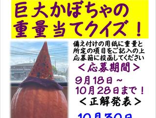 ハロウィンかぼちゃ重量当て!