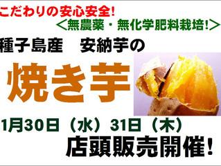 種子島産安納芋の焼き芋店頭販売!