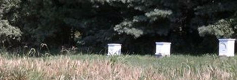 butters bees, pure honey, raw honey, treatment free honey, iowa