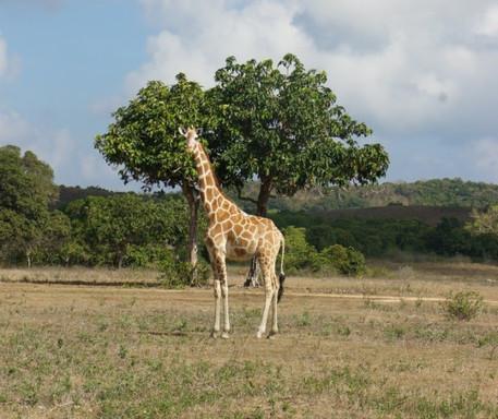 Calauit Safari.jpg
