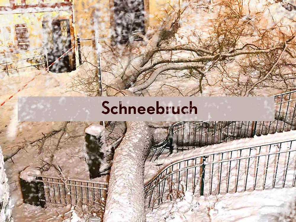 In der letzten Woche hat es in Dresden zur Freude der Kinder wie verrückt geschneit. Unter der Last der weissen Pracht gab es allerorten Schneebruch. Wir haben uns mit Lindenholz eindecken können. Als Großstädter die Büume aus dem Viertel verarbeiten zu können, ist eine runde Sache. Derzeit suchen wir den idealen Zapfen für eine Spinne. Meister M8 hat tolle Teile geschnitzt.