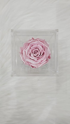 Small single Eternity Rose