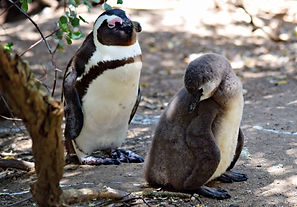 penguin and chick .jpg