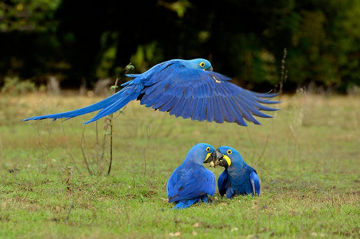 Vivenciando o Pantanal