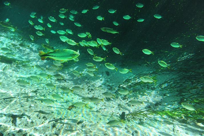 Paraíso das águas de Bonito - MS