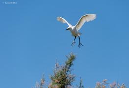 Approche du nid