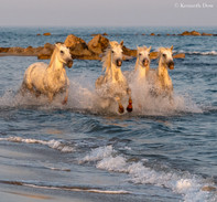 Gallop through the waves