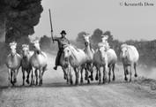Gardian et chevaux