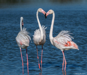three flamingos (2)