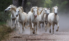 Gallop Among the Pines.jpg