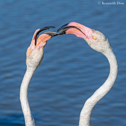 flamingo interaction
