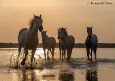 Cinq sœurs au coucher du soleil