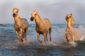 Pagayer au bord de la mer