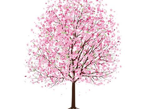 Cherry Blossom Love Review