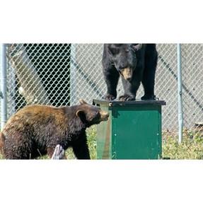 TyeDee Bin Bears.jpg