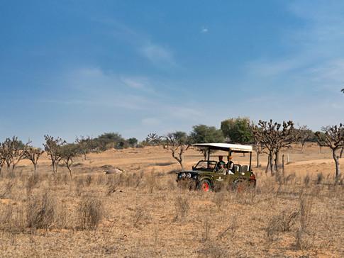 Jeep Safari 2 copy.jpg