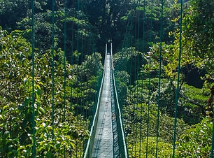 hanging-bridge-at-monteverde.jpg