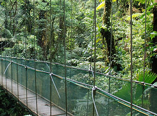 Arenal-Hanging-Bridges.jpg