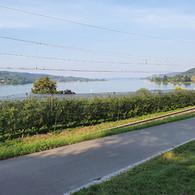 Bodensee - Blick