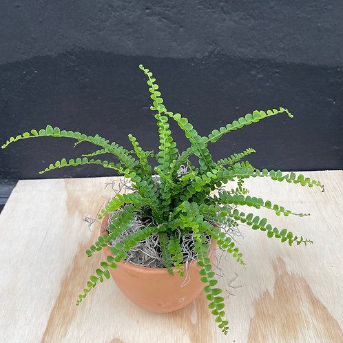 Mother's Day Plant in Terra-cotta Pot