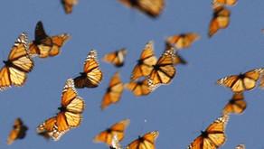 Temendo a travessia da vida? Inspire-se nas pequeninas borboletas!