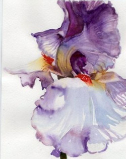 """Watercolor, """"Iris"""""""