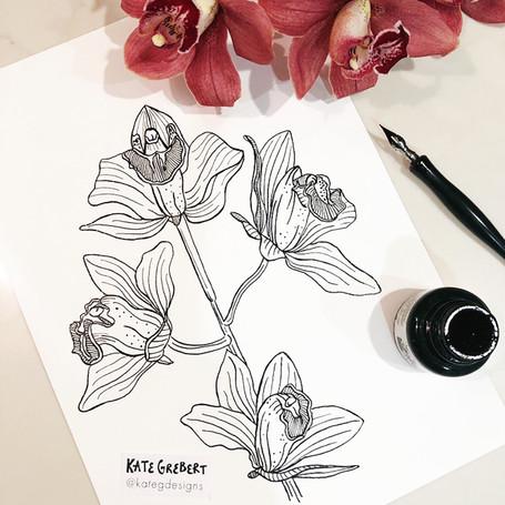 Orchid-ink-drawing-Sydney-Illustrator-Ka