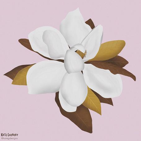Magnolia-Editorial-Illustration-Sydney-I