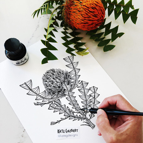 Banksia-ink-drawing-Sydney-Illustrator-K